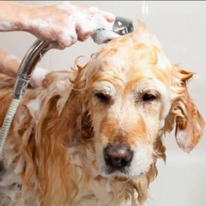 Higiene y limpieza